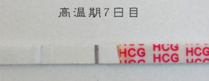 高温期7日目 早期妊娠検査薬フライング