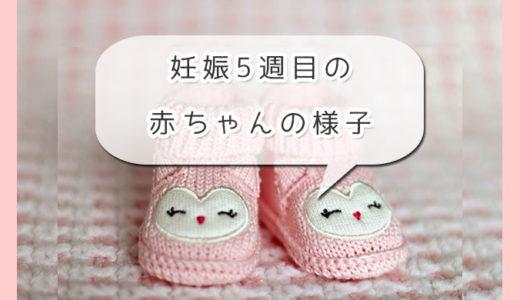 妊娠5週目の赤ちゃんってどんな感じ?エコーでどんな風に見えるの?